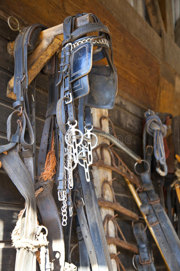 Horse equipment. On wall in barn royalty free stock photos