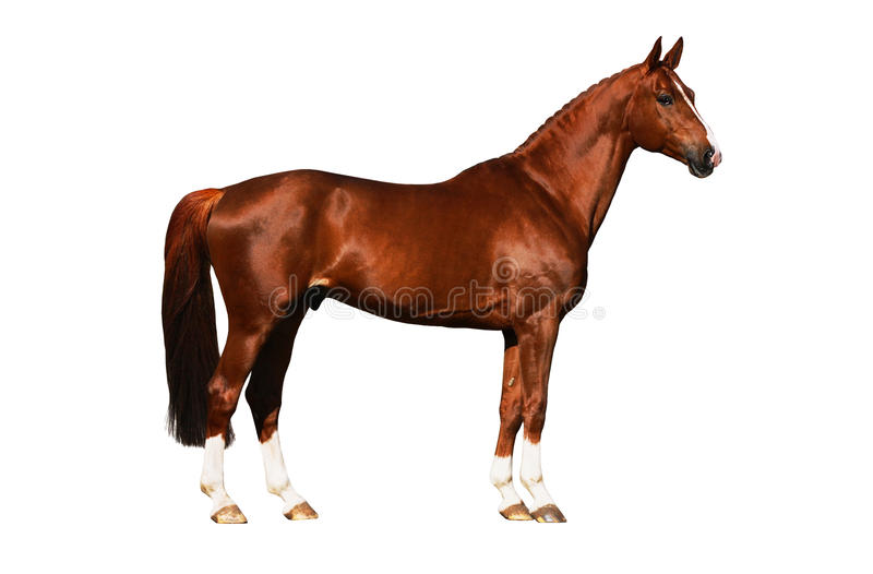 Horse exterior isolated stock photography