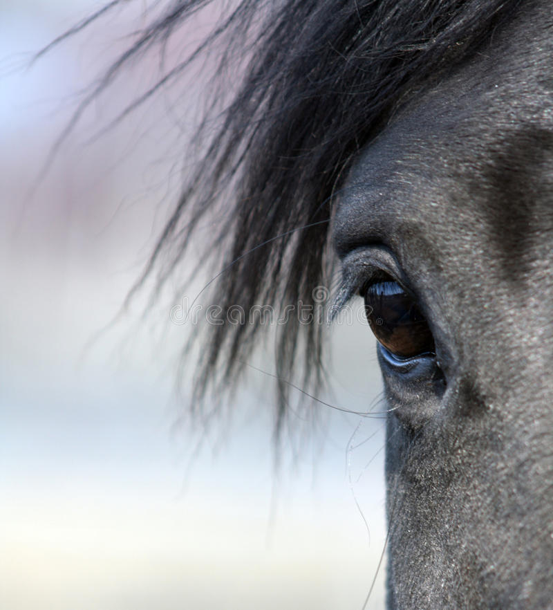 Horse eye. Beautiful horse eye in close-up stock photos