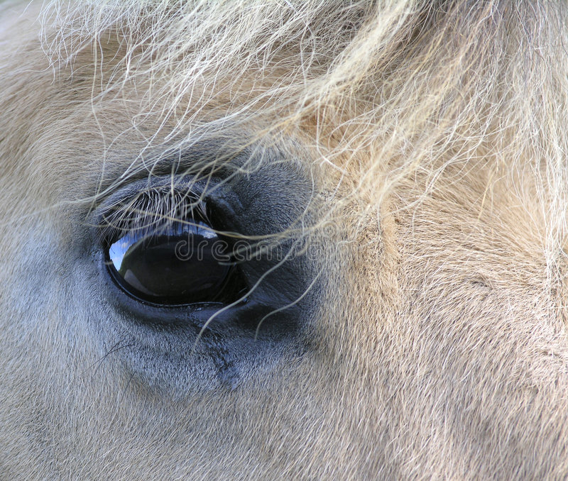 Horse eye. Close-up of horse eye royalty free stock photography