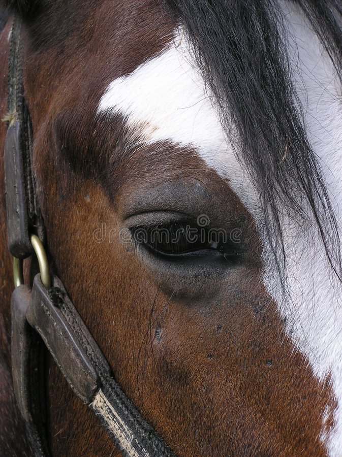 Horse Eye. A horse`s eye stock photos