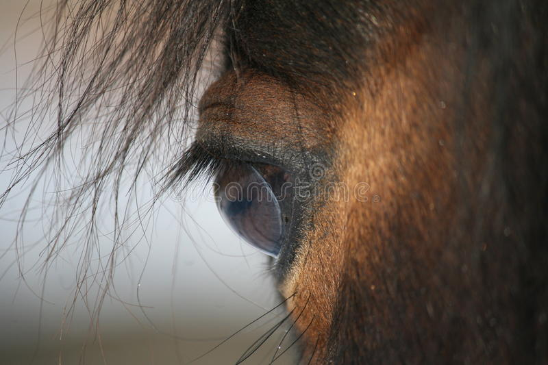 The horse eye. The detail of the brown horse eye stock photo