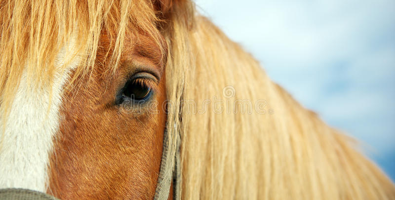 Horse eye. Element of design royalty free stock images