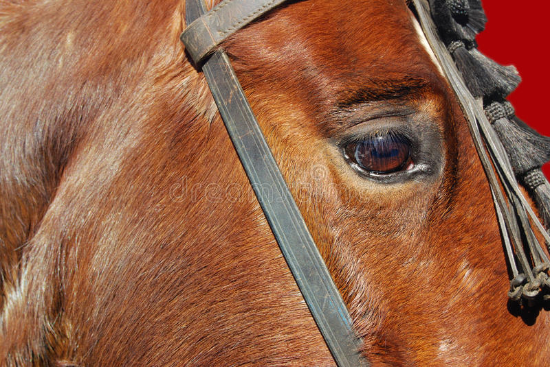 Horse eye. Close up on a chestnut horse eye stock photo