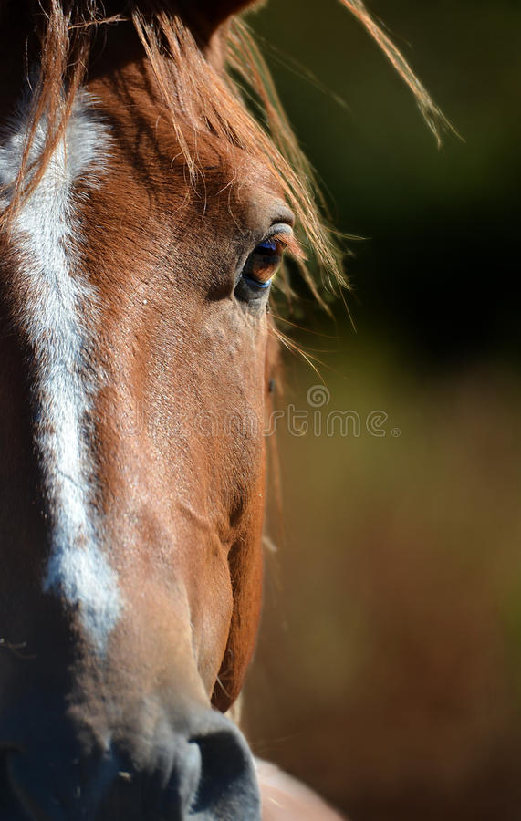 Horse eye. Close up on a brown horse eye stock photography