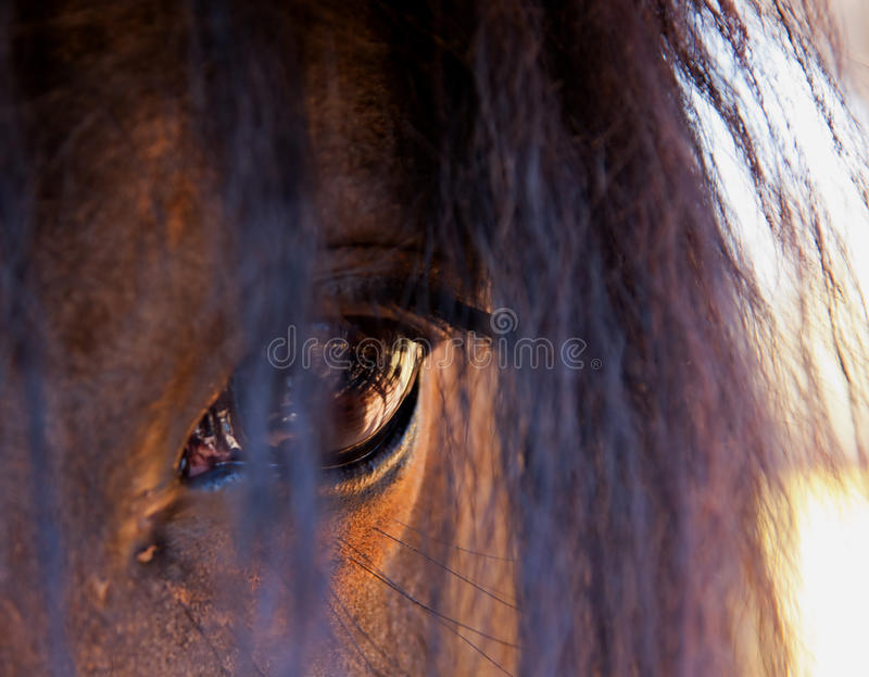 Horse eye. A lovely Horse eye closeup royalty free stock photography