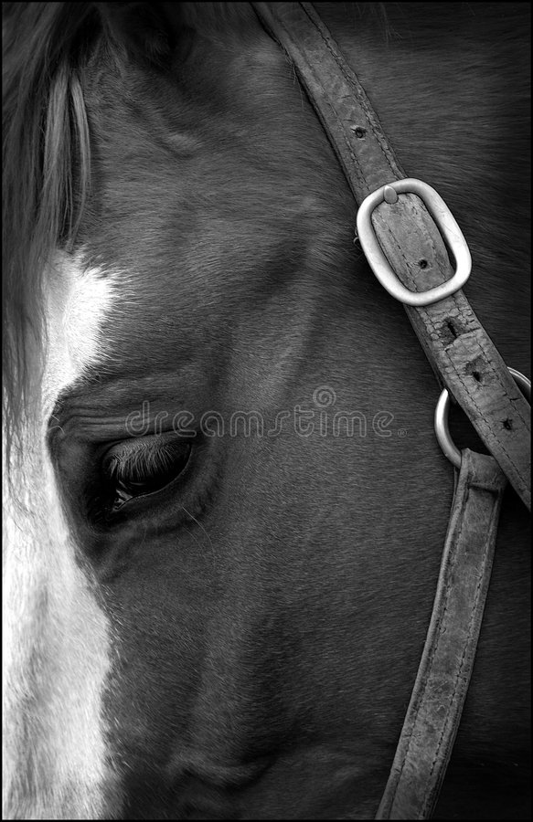 Horse eye. A close up of a horse head and brown eye stock photography