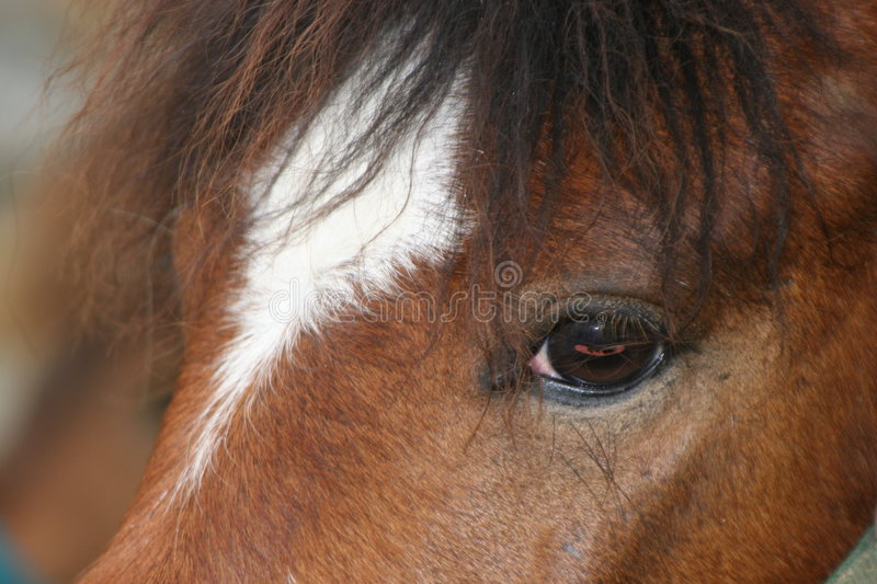 Horse eye. A young horse intense eye royalty free stock photos