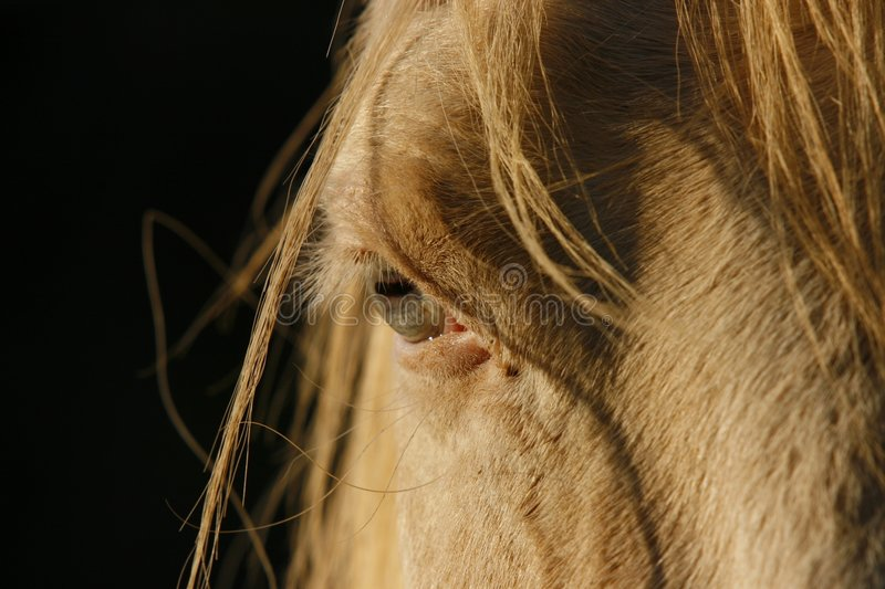 Horse eye stock photos