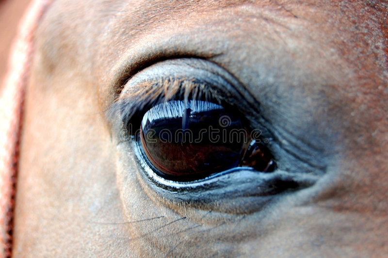 Horse eye stock photo