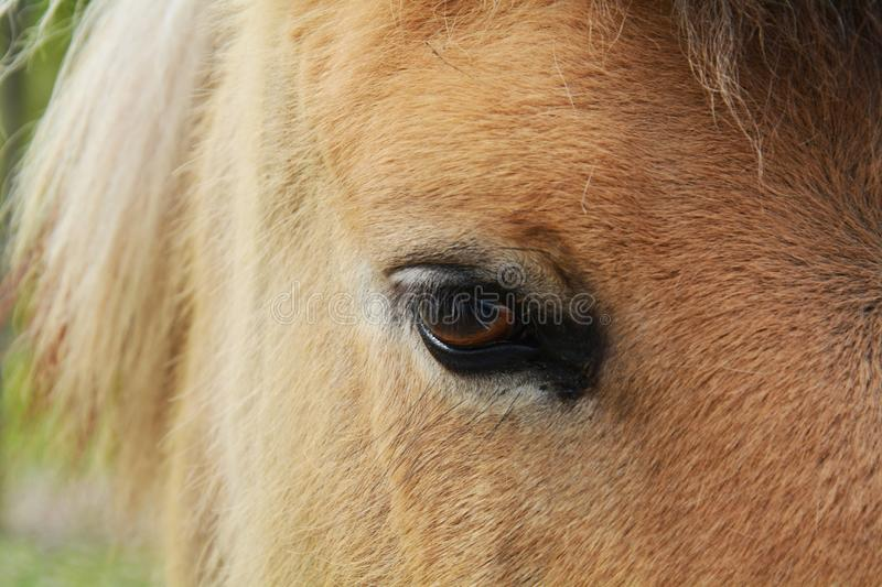 Horse eye. A beautiful shot of a brown horse, a sad eye of a horse, close up stock photo