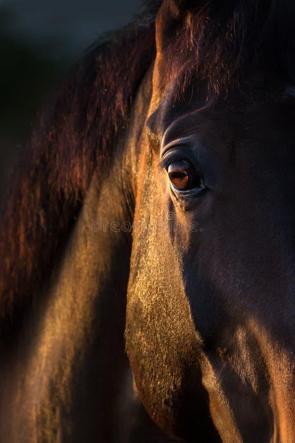 Free Horse Eye Close Up Royalty Free Stock Photos - 73652638