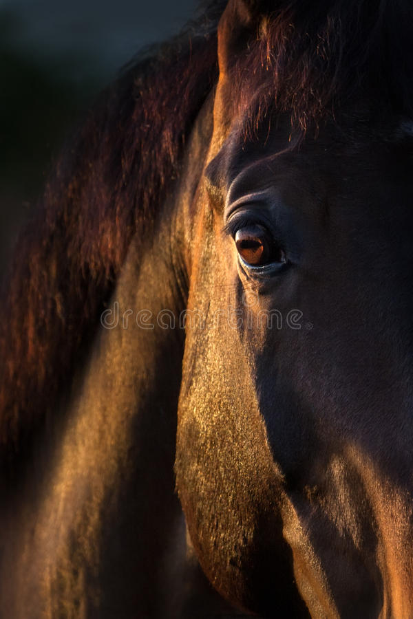 Horse eye close up. Black horse eye at sunset light close up royalty free stock photos