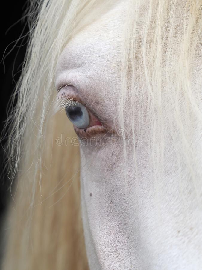 Horse Eye. A close up of a horse with a blue eye royalty free stock photography