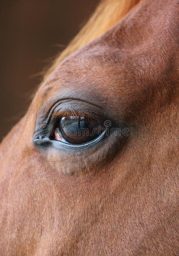 Horse eye close-up detail with reflection of yard. Horse eye head closeup with reflection of me and the yard on eye royalty free stock images
