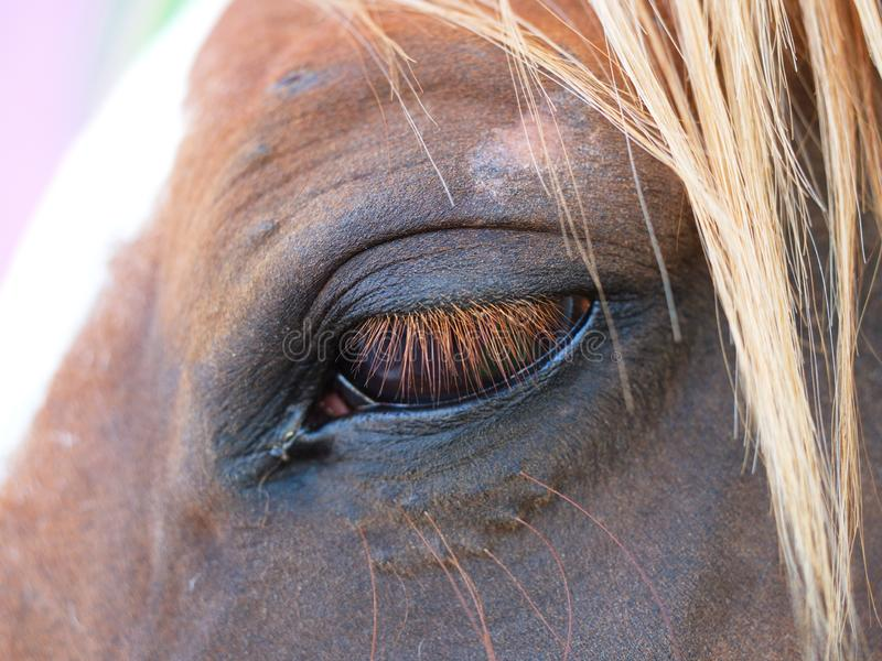 Horse eye close up. Emotional point of view stock photo