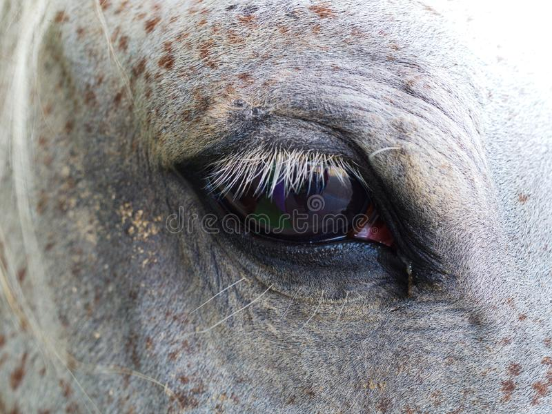 Horse eye close up. Emotional point of view stock image