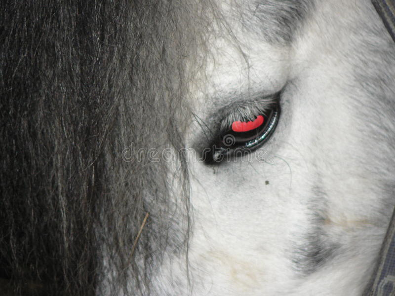 Horse eye stock photography
