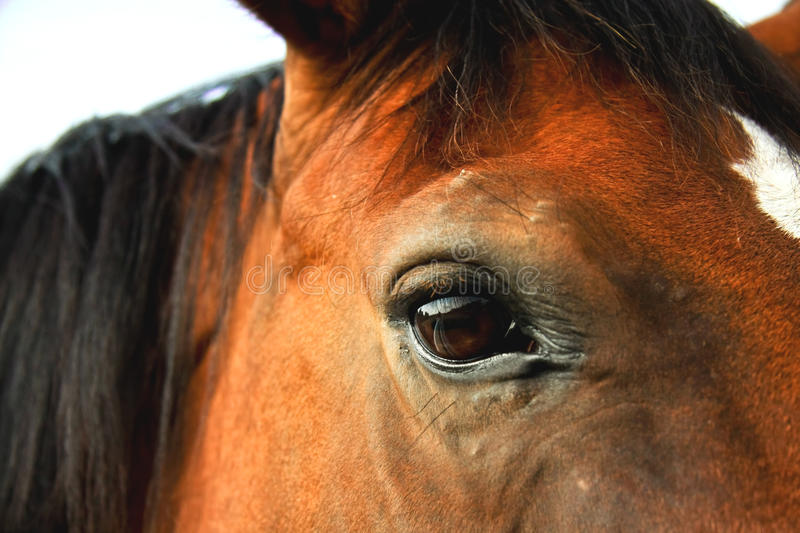 Horse eye closeup. A closeup image of a brown horse eye stock photography