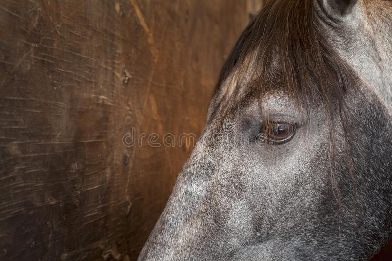 Horse eye closeup. Color image stock photography