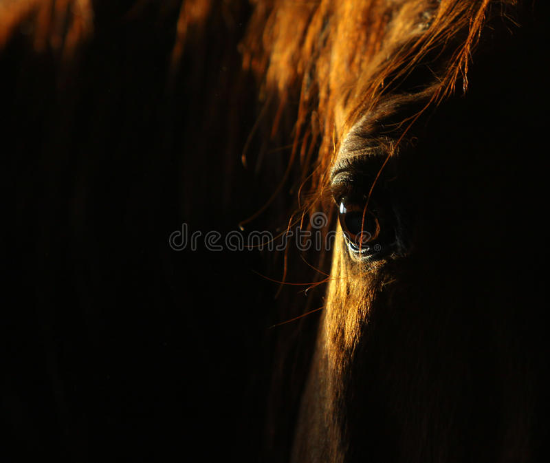 Horse eye in dark. Caught by sunbeam royalty free stock photography