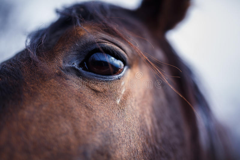 Horse Eye Detail. A detail of a horse eye at autumn time royalty free stock photo