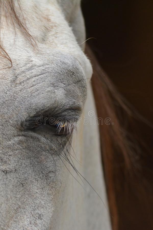 Horse eye. Close up shot stock photos