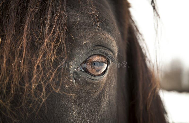 Download Horse Eye (left eye). stock image. Image of up, looking - 29701239