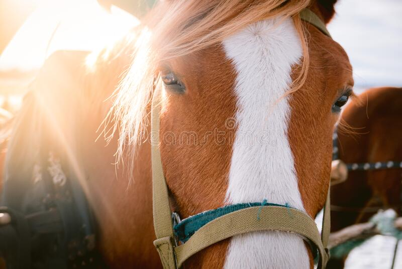 Horse eye shoot outdoors at animal farm royalty free stock photography