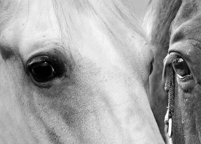 Download Horse eyes stock photo. Image of black, horse, eyes, horses - 16904942