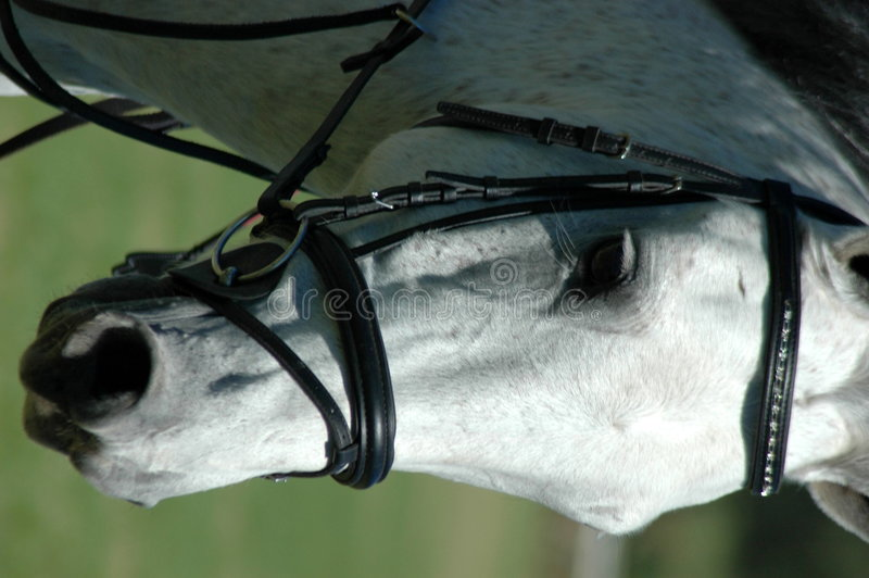 Horse face close stock image