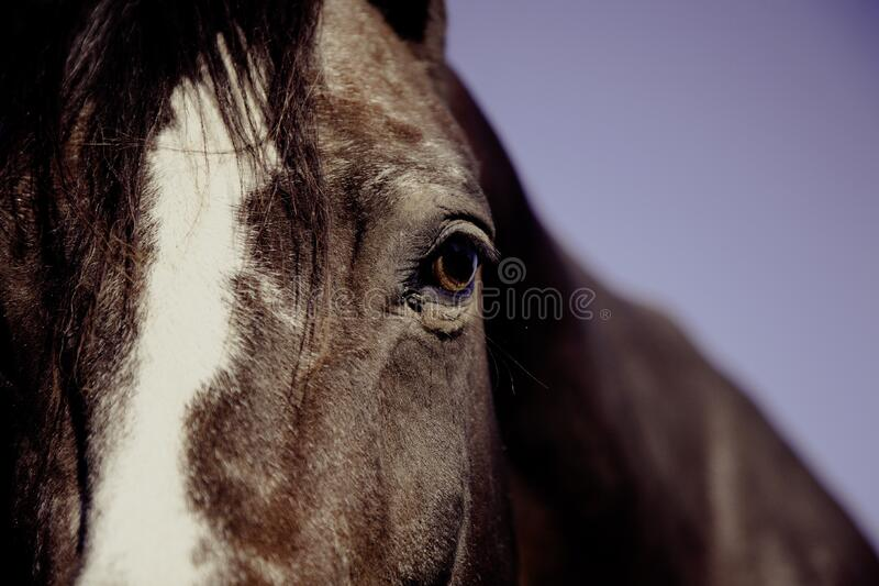 Horse Face In Focus Phography Free Public Domain Cc0 Image