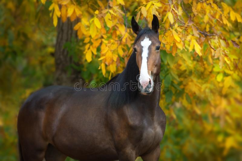 Horse on fall background royalty free stock image