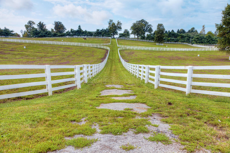 Download Horse farm stock photo. Image of scenic, domestic, perspective - 24111280