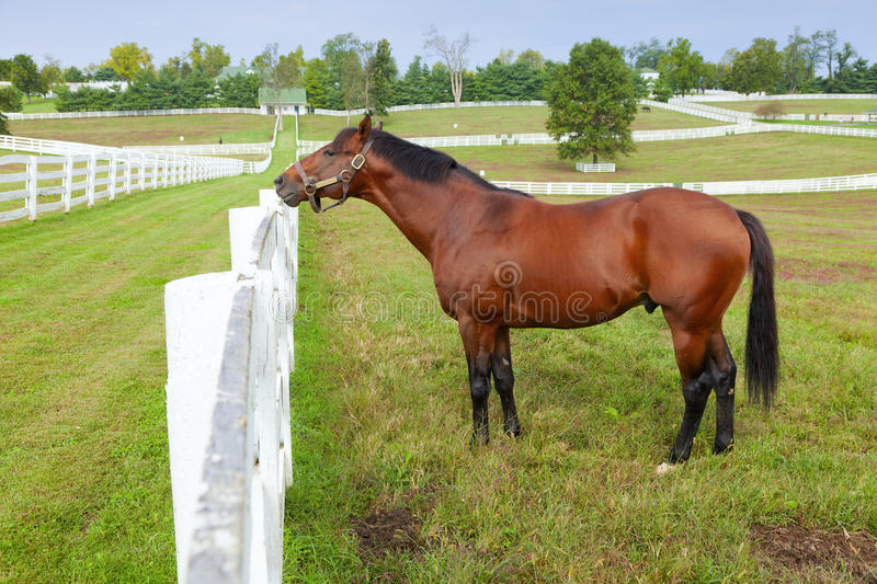 Download Horse on a farm stock photo. Image of outdoors, kentucky - 24451450