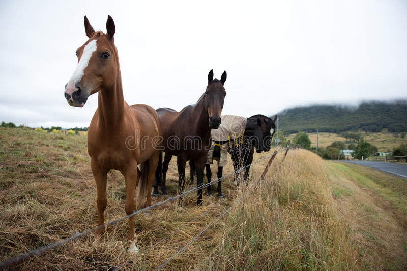 Horse in farm stock photos