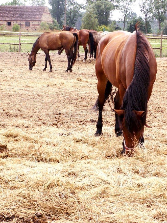 A horse farm royalty free stock image