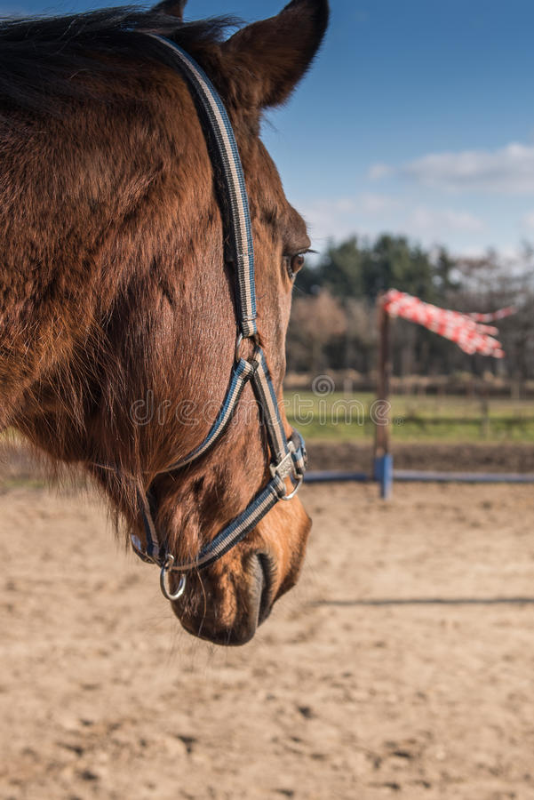 Horse on farm royalty free stock images
