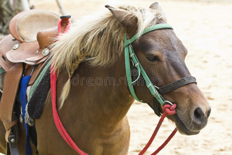 Download Horse on farm Chokchai stock photo. Image of grass, nature - 26611972