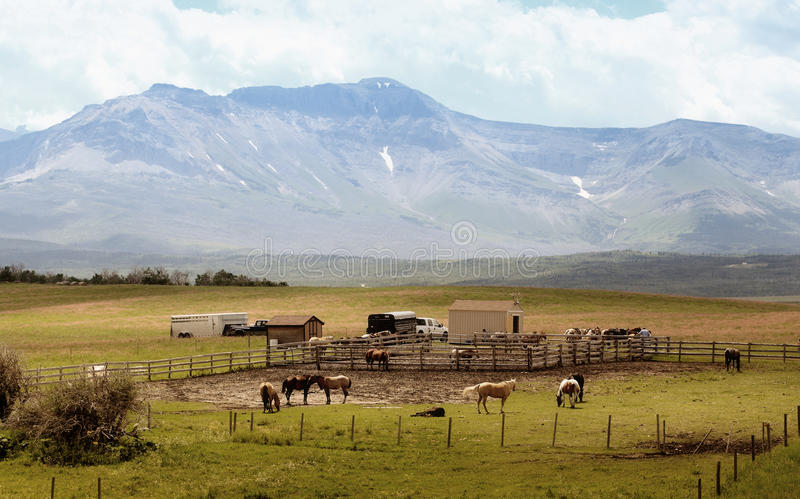 Horse farm in countryside stock photography
