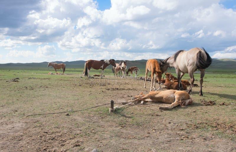 The horse farm royalty free stock photography