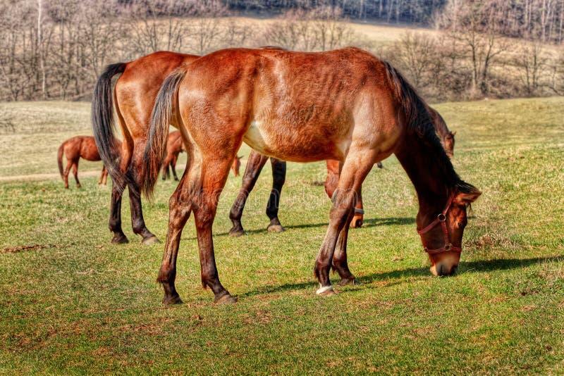 Grazing Horse Farm stock images