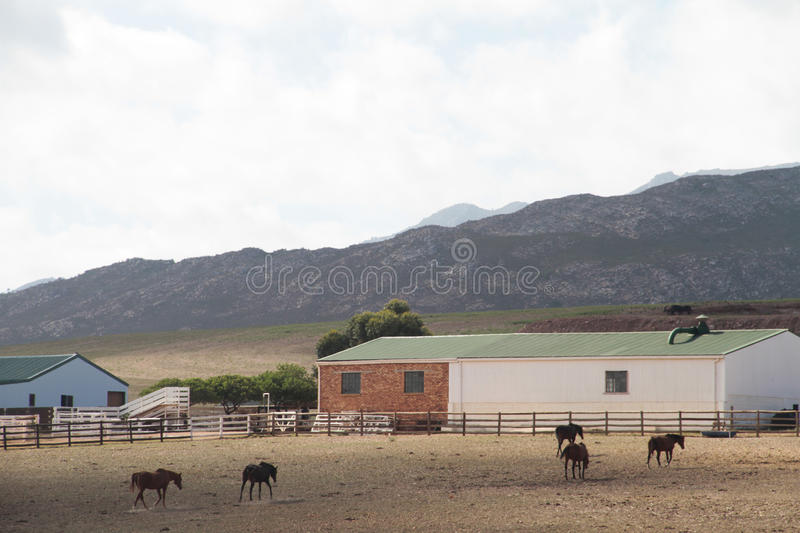 Download Horse Farm Landscape Royalty Free Stock Photography - Image: 23821267