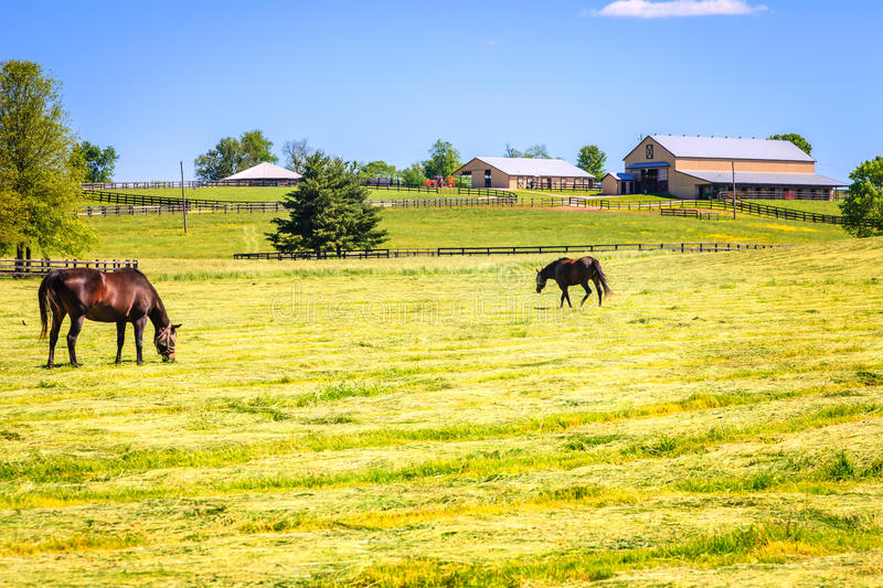 Download Horse Farm Stock Photography - Image: 32545262