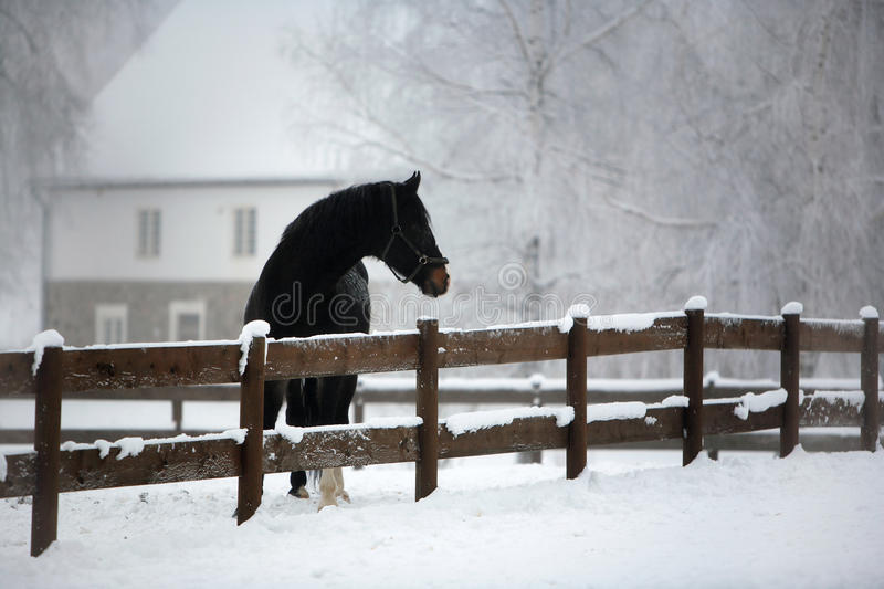 Download Horse Farm in Winter stock image. Image of pony, farm - 19223537
