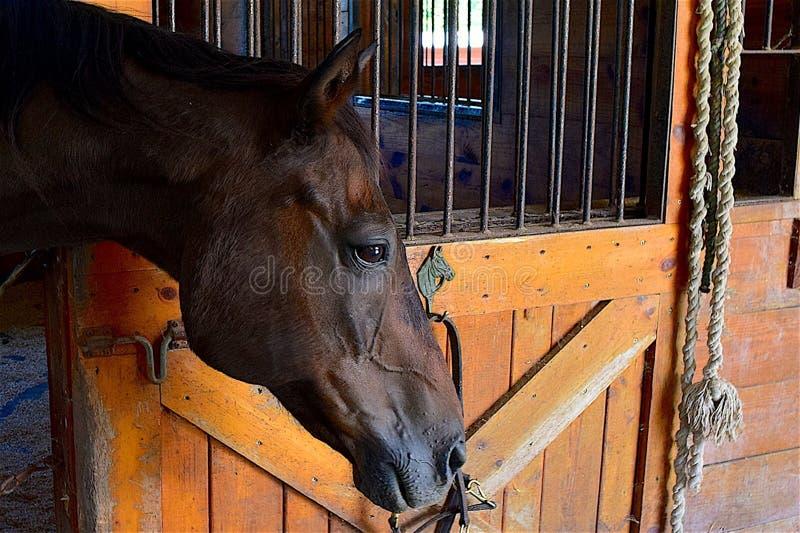 Horse, Fauna, Horse Like Mammal, Stable Free Public Domain Cc0 Image