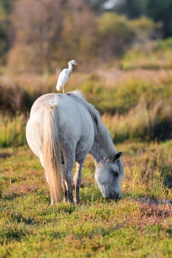 Horse, Fauna, Pasture, Crane Like Bird Free Public Domain Cc0 Image