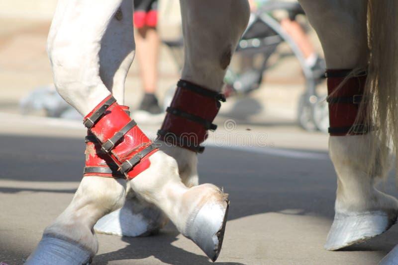 Horse feet stock photo