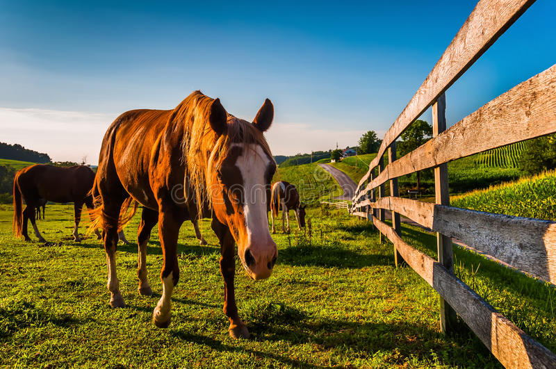 Horse and fence in a field on a farm in York County, Pennsylvania. stock photography