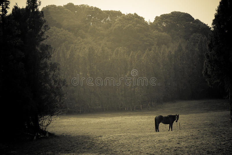 Horse and Field royalty free stock image